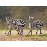 Zebra art paintings