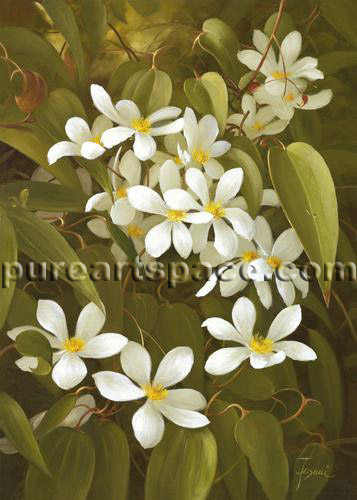 China oil painting manufacturer wholesale all kinds top quality art white flower oil painting mightylinksfo